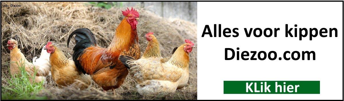 alles voor kippen
