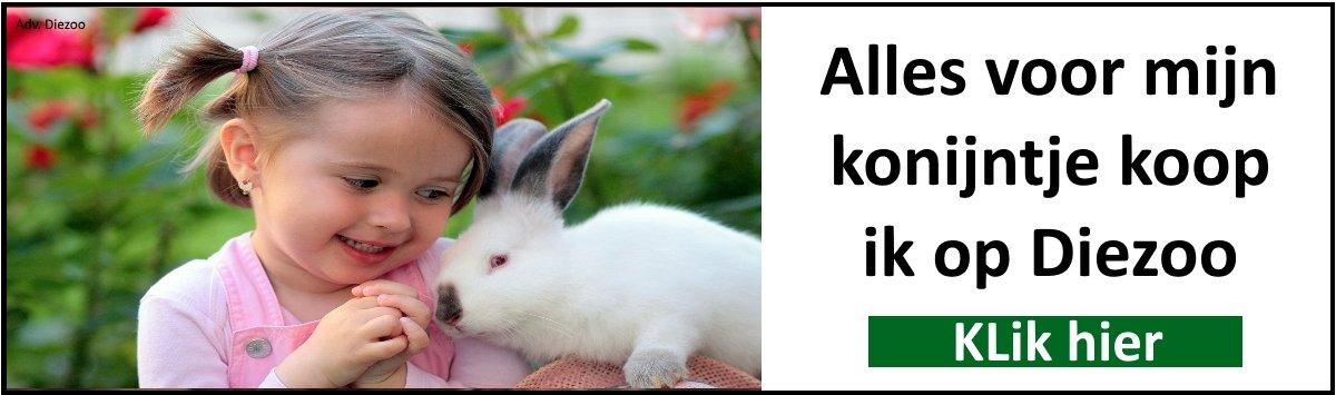 alles voor mijn konijntje koop ik op diezooo