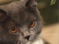 Kattennamen - dierennamen