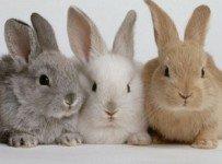 konijnennamen