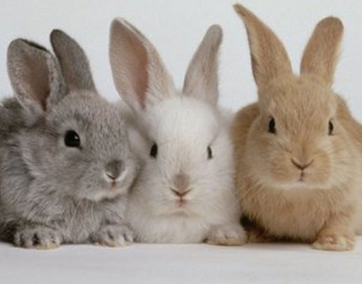 namen voor konijnen alfabetisch van a tot z - dierennamen