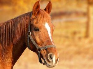 paardennamen