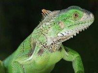 reptielen - dierennamen