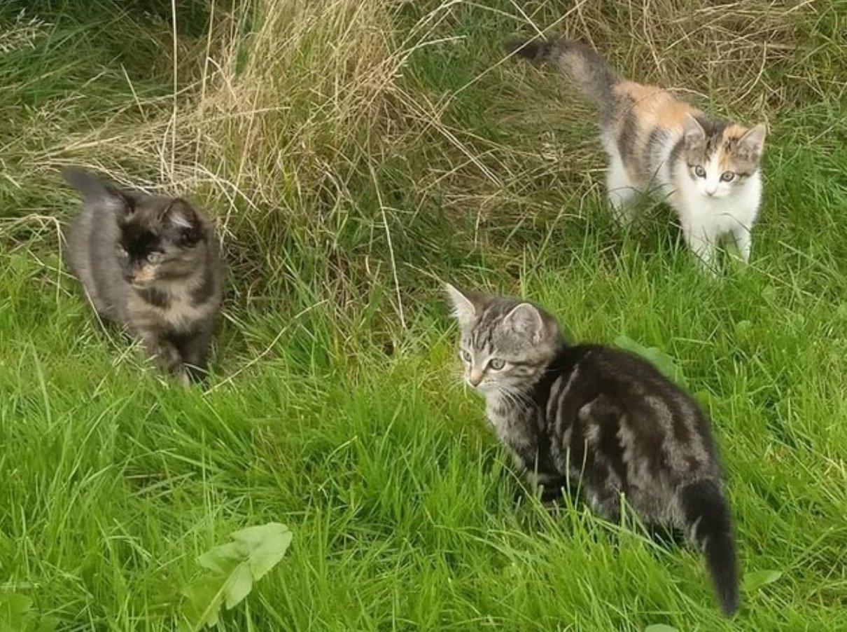 Kattennamen duo - dierennamen